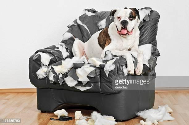 Solitaire chien Boxer