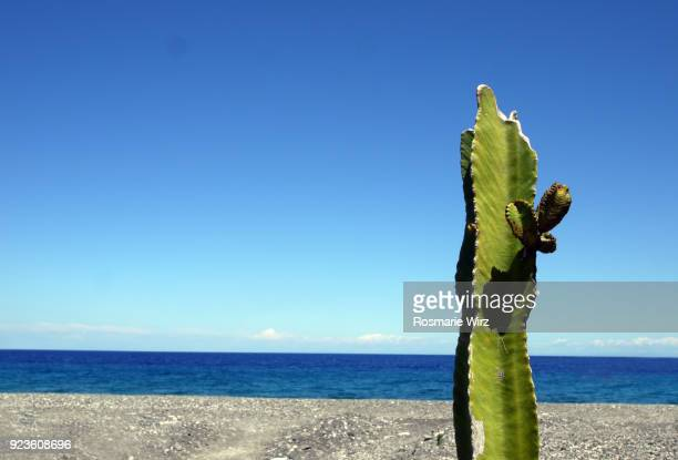 Lonely cactus column on Lipari beach