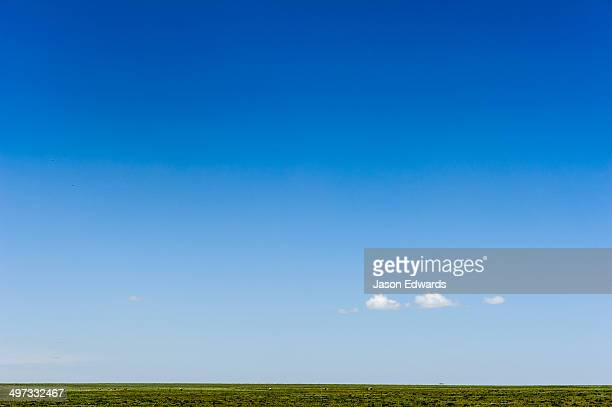 A lonely cloud dwarfed by a vast blue sky over the savannah grassland horizon.