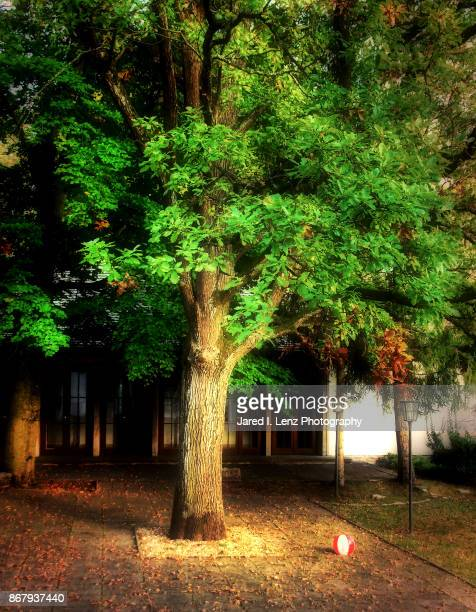 Lonely Courtyard Tree & Ball