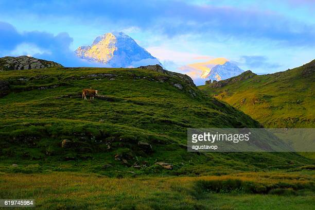 Lonely Cow, Eiger and Monch above Grindelwald: Swiss Alps