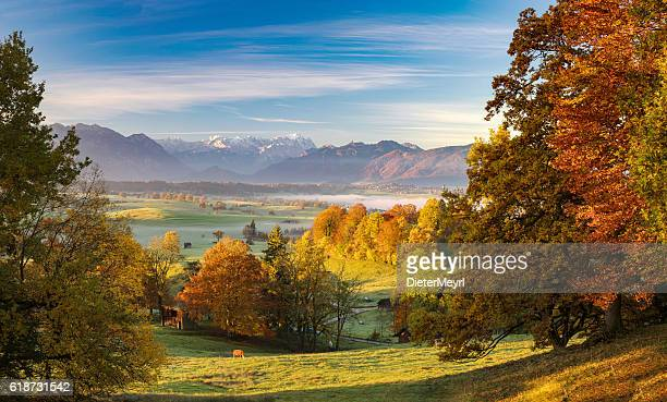 lonely cow in autumn at riegsee with zugspitze in background - bavaria stock pictures, royalty-free photos & images