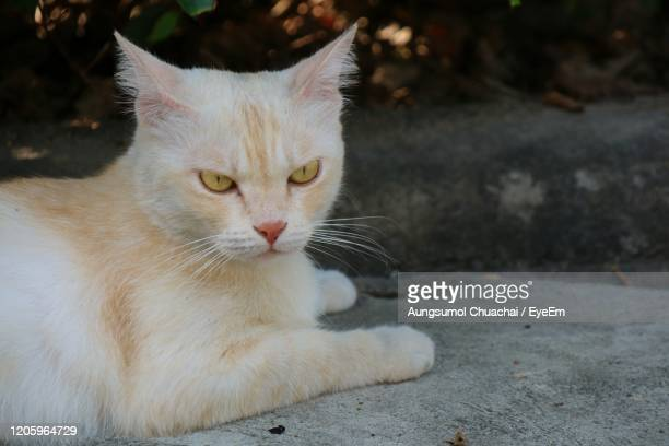 lonely cute white and orange cat looking wonder and lying on concrete floor. - aungsumol stock pictures, royalty-free photos & images