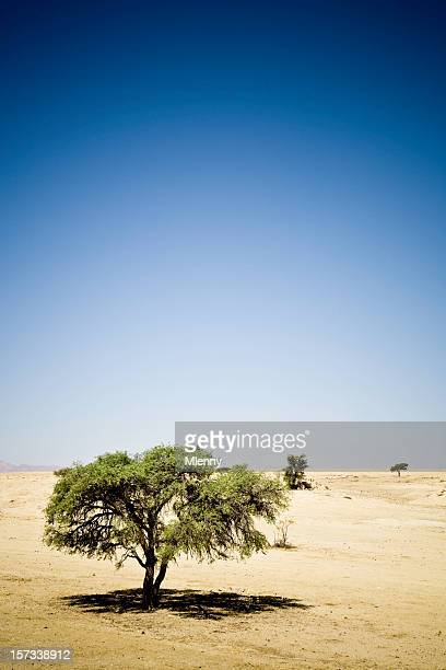 lonely desert tree - mlenny stock pictures, royalty-free photos & images