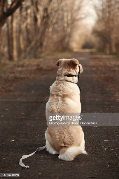 Lonely Dog Waiting to go on a Walk
