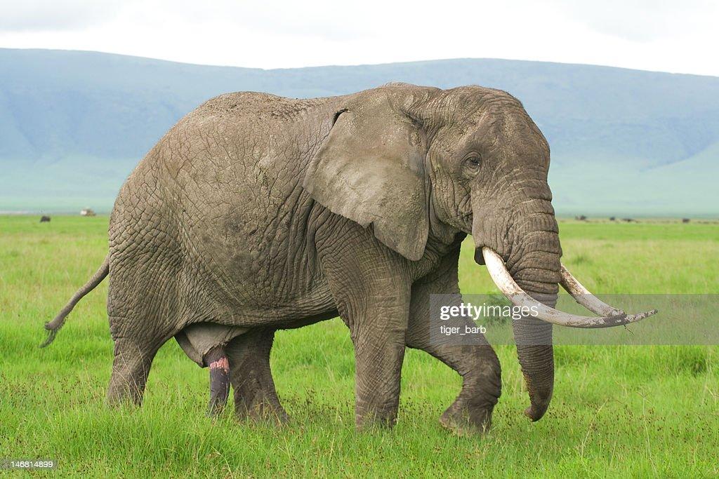 интерьерную переделку стояк у слона фото как