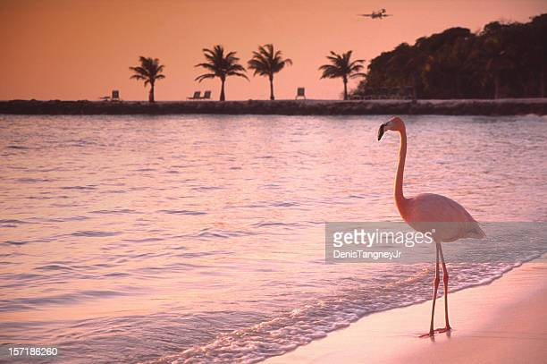 Lonely Flamingo