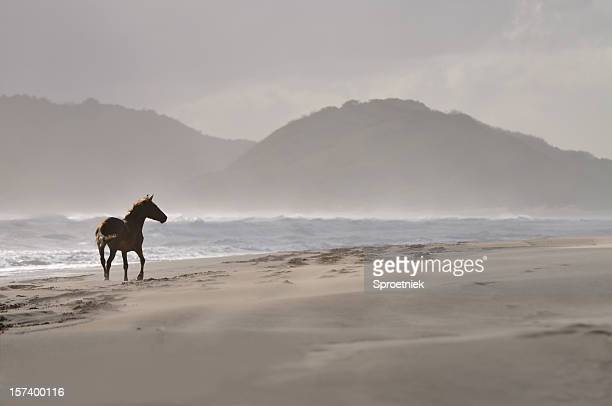 Lonely horse on beach