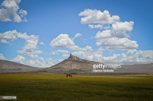 lonely horse - radicella photos et images de collection