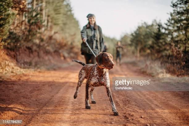 caçador só - cão adestrado - fotografias e filmes do acervo