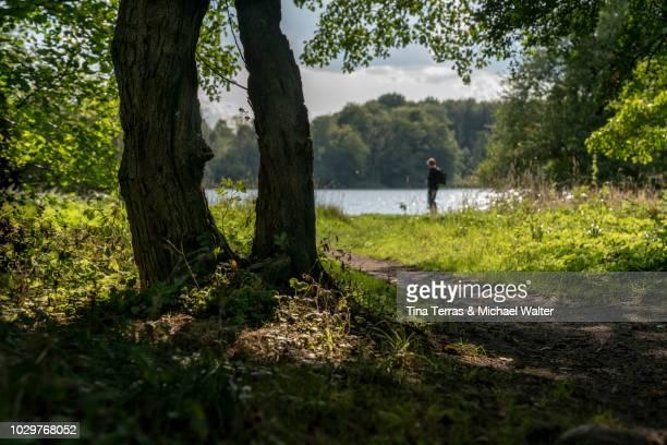 lonely path in the forest - schleswig holstein stock-fotos und bilder