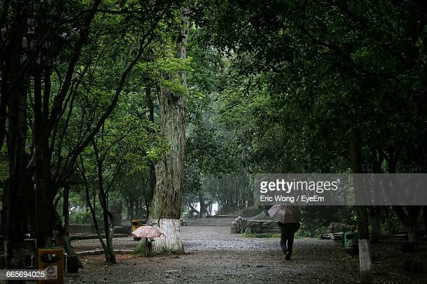 Lonely Person Walking In The Park In A Rainy Day