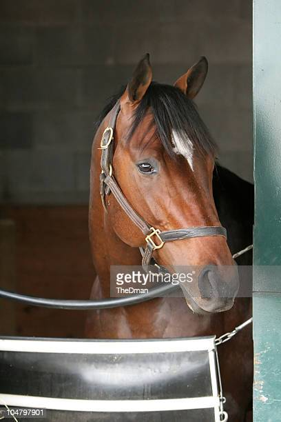 lonely - bay horse stock photos and pictures