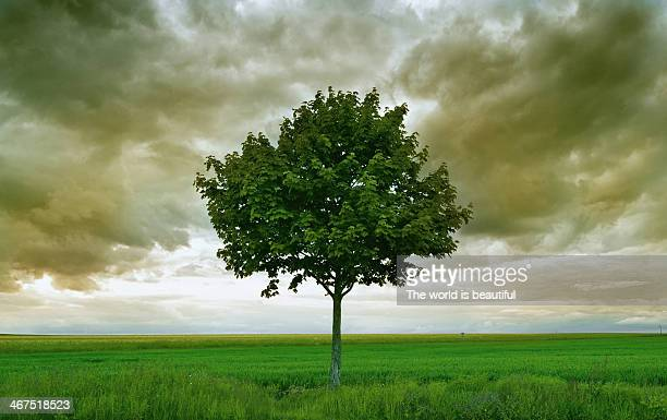 lonely - single tree stock pictures, royalty-free photos & images