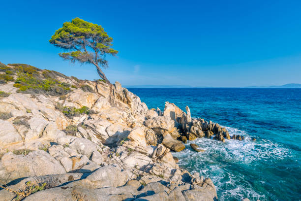 Lonely pine tree, on eroded rock formation, with azure sea and clear sky -  Sithonia peninsula, Halkidiki, Greece.