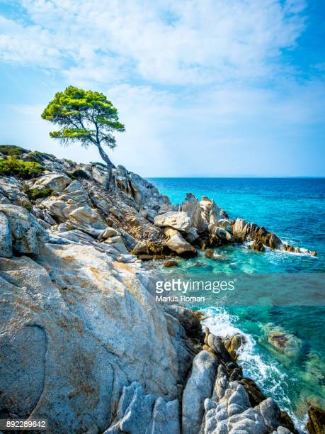 lonely pine tree, with rocks, and cloudy sky, near orange beach, on sithonia peninsula, halkidiki, greece. - peninsula de grecia fotografías e imágenes de stock