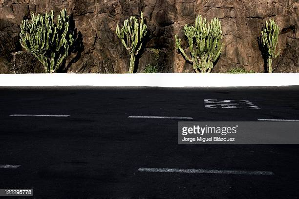 Lonely road with cactus on background