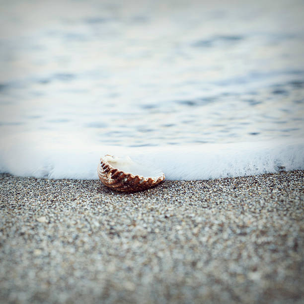 A Lonely Sea Shell On Sand And The Sea Wall Art