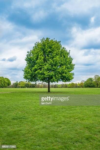 Lonely, Single Tree in the Field