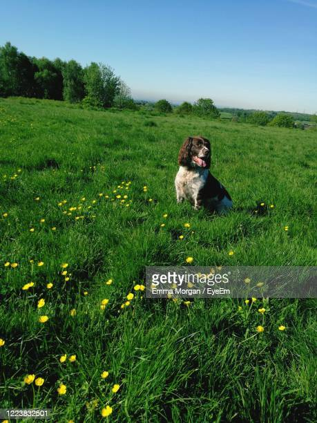 lonely springer - newport wales photos stock pictures, royalty-free photos & images