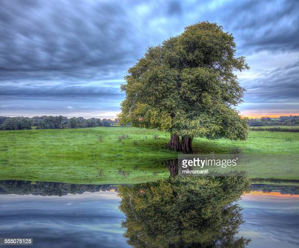 Lonely tree and reflection