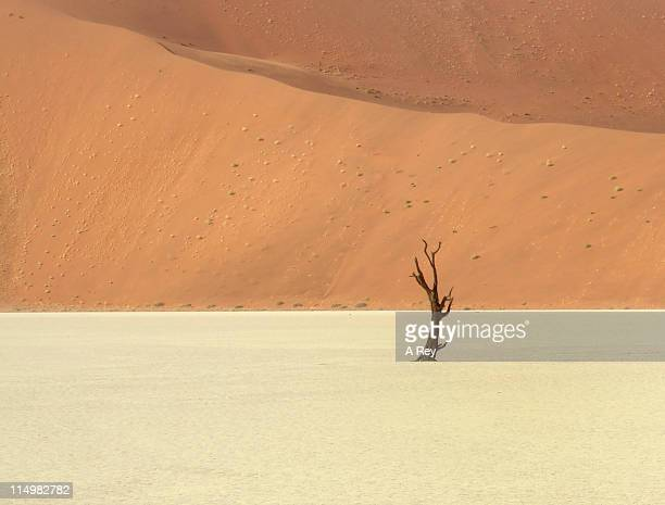 Lonely tree at Dead Vlei