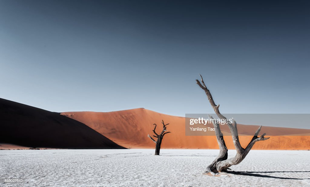 Lonely Tree at Namib Sand Dune : Foto de stock