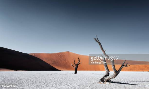 lonely tree at namib sand dune - sec photos et images de collection