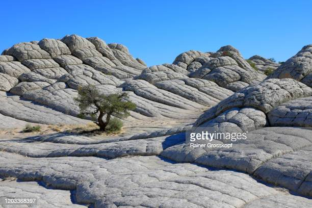 lonely tree growing between gray rocks in a mountaineous desert landscape - rainer grosskopf fotografías e imágenes de stock