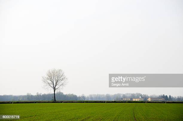Lonely tree in a field in the Italian countryside
