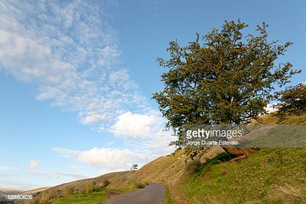lonely tree in a remote are of the breacon beacons - jorge duarte estevao stock pictures, royalty-free photos & images