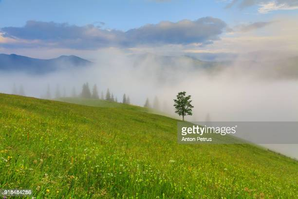 Lonely tree in foggy mountains