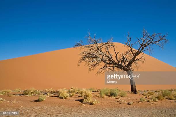 einsame baum vor sand dune - mlenny stock-fotos und bilder