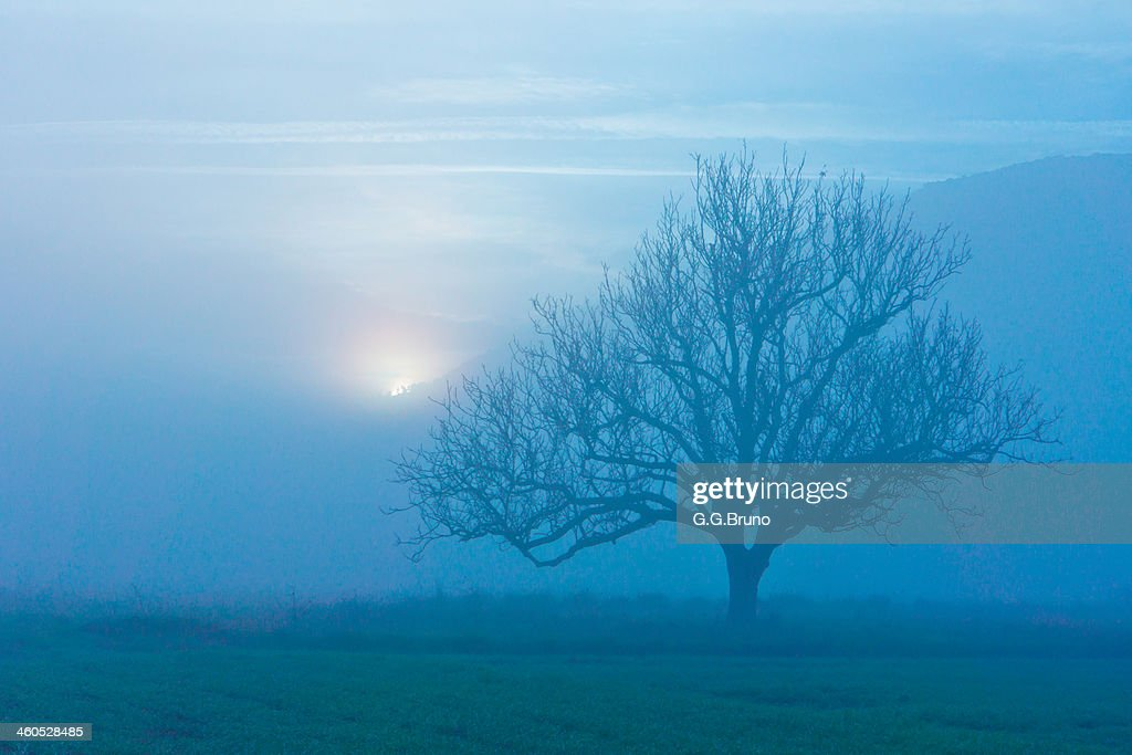 lonely tree in misty landscape at dawn : Stock Photo