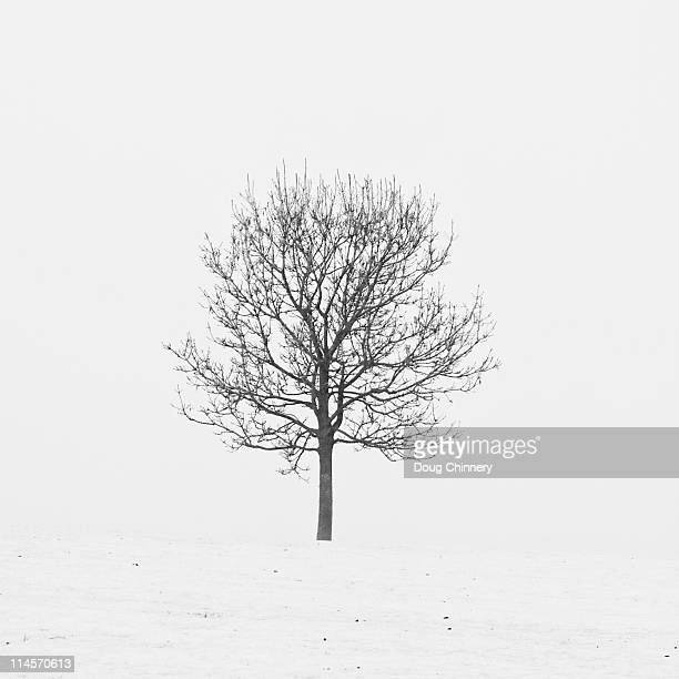 lonely tree in snow - kahler baum stock-fotos und bilder