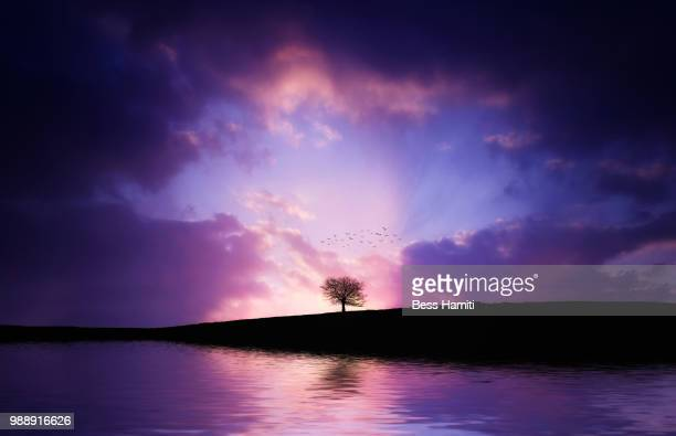 lonely tree in the lake with sunset - dawn bess stock pictures, royalty-free photos & images