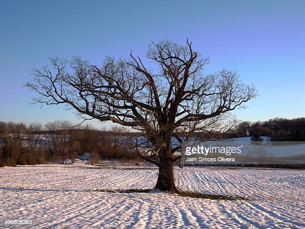 a lonely tree in the snow - blacksburg stock pictures, royalty-free photos & images