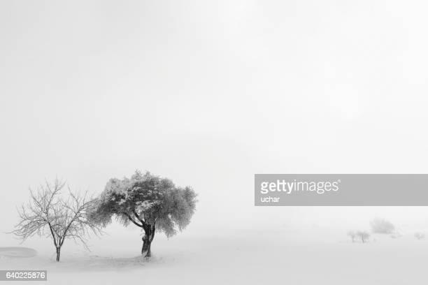 Arbre solitaire dans la neige