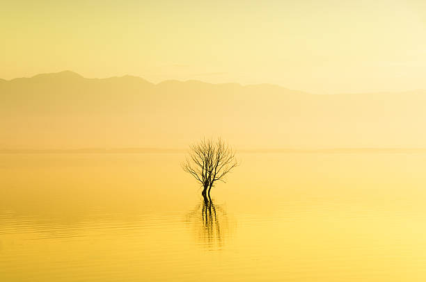 Lonely Tree In The Water On Foggy Sunrise Wall Art