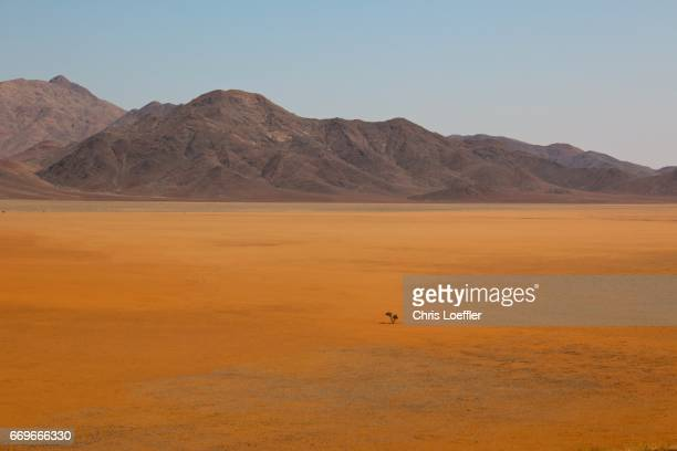 lonely tree, namibrand reserve, namibia - wüste stock pictures, royalty-free photos & images