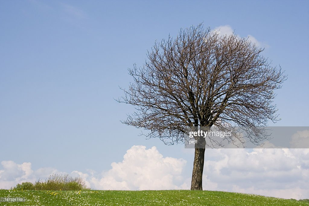 Lonely tree on a hill : Stock Photo