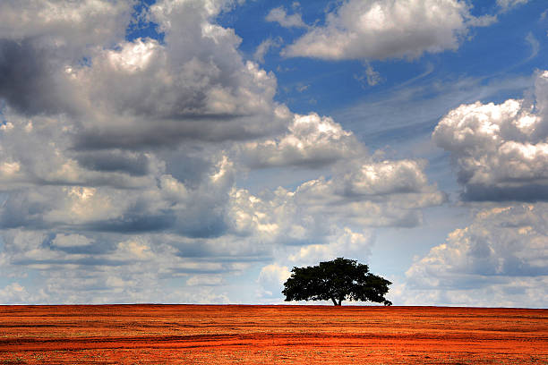 Lonely tree on plowed soil