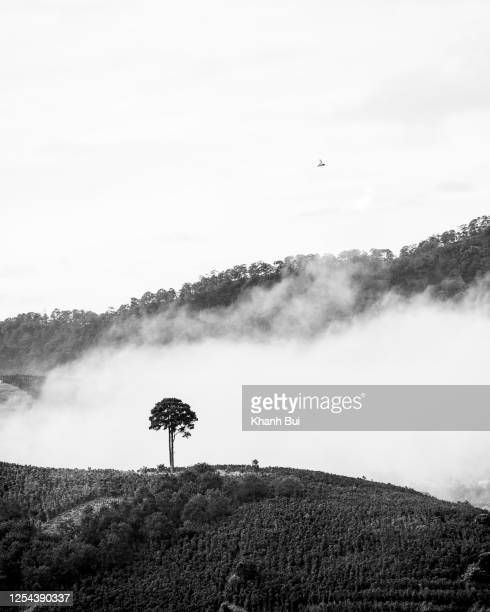 lonely tree on the hill and lonely bird on the sky with abstraction of black and white version - black and white instant print stock pictures, royalty-free photos & images