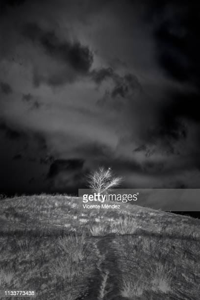 lonely tree on the hill - blanco y negro stock pictures, royalty-free photos & images