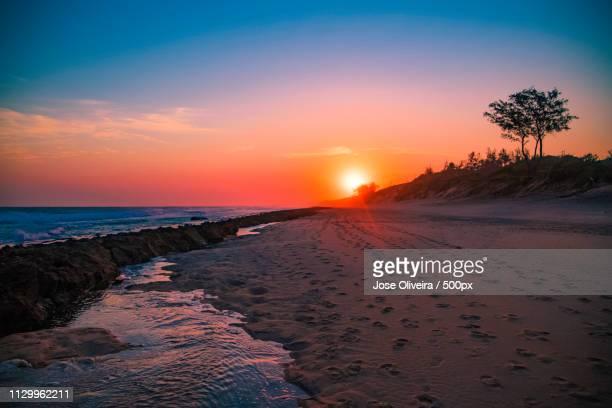 lonely tree - モザンビーク ストックフォトと画像