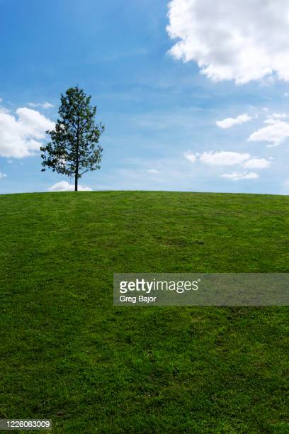 lonely tree - greg bajor stock pictures, royalty-free photos & images