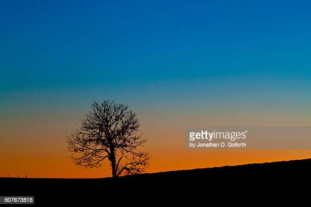lonely tree - eubank stock photos and pictures