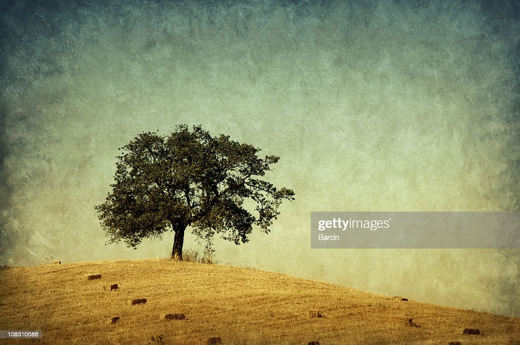 Lonely tree, retro-style photo : Stock Photo