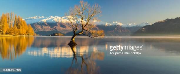 lonely tree submerged n lake - wanaka - fotografias e filmes do acervo