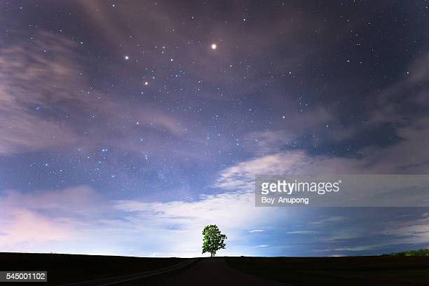 lonely tree under the starry night sky. - dusk stock pictures, royalty-free photos & images